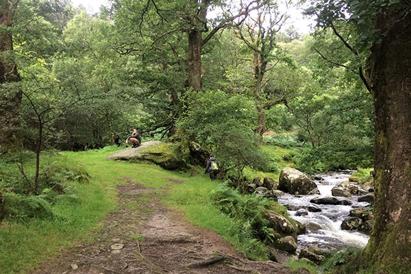 glengarriff-waterfall-forest-bathing-west-cork-ireland